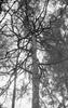 Silberra CINEMA 52XX B&W Film ISO200 135/36 Photo 2